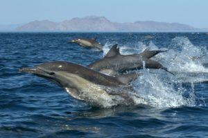 Дом дельфинов 60 $