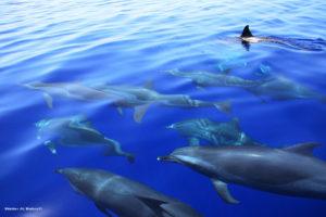 Дом дельфинов из Хургады 15 $