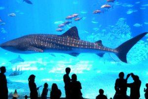 аквариум в Хургаде 30 $